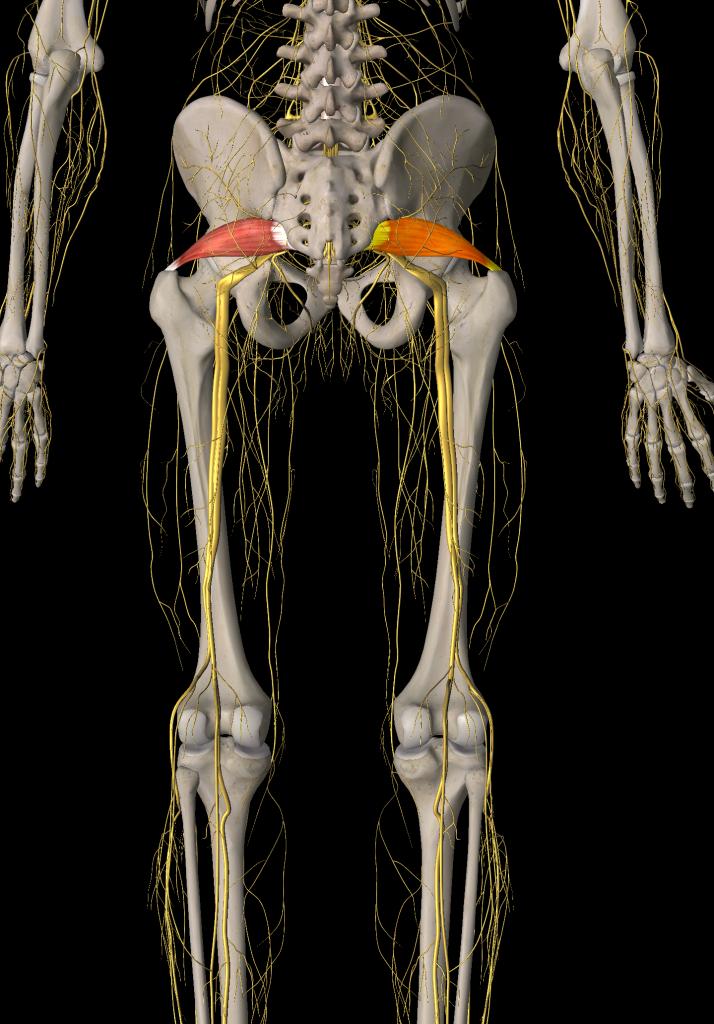 Psoas And Piriformis Two Pain Causing P S Gfr