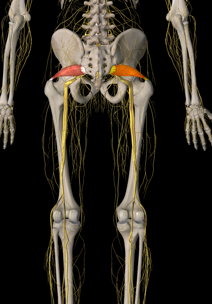 Psoas And Piriformis Two Pain Causing Ps Gfr Greenville